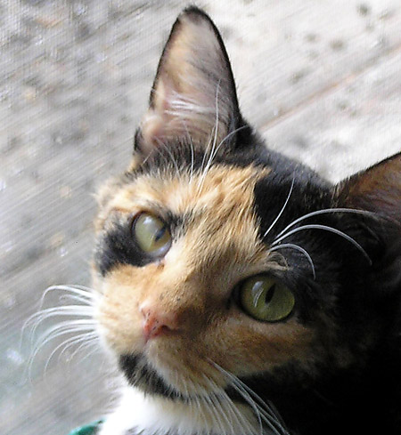 Rainbow, our wonderful sweet loving tortoise-shell cat. She died of feline leukemia. We wish we could stamp out this disease.